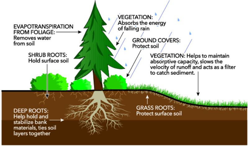 Erosion - Types, Phases, Agents, and Effects - Forestrypedia