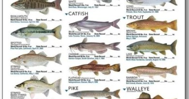Types of Fish found in Pakistan - Forestrypedia