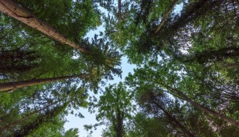 National Definition of Forest | Notification - Government of Pakistan Ministry of Climate Change - forestrypedia.com