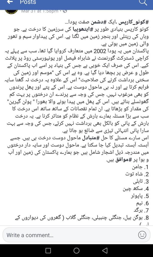 Status of Conocarpus Tree in Pakistan especially in Karachi | Alternatives of Concarpus