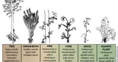 Tree Vs Shrub - Forestrypedia