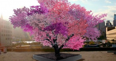 Tree with 40 Fruits - Forestrypedia