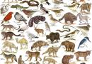 Factors Responsible for the Depletion of Wildlife - Wildlife of Pakistan - Forestrypedia