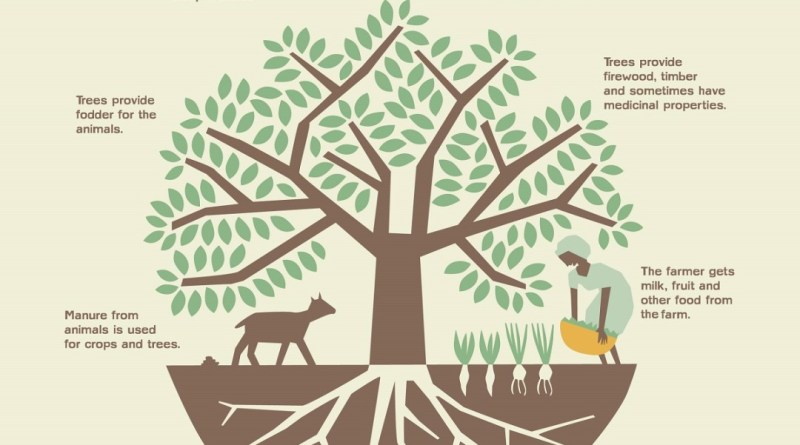 Agroforestry System - forestrypedia