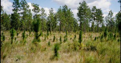 artificial regeneration - Forestypedia