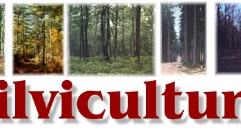 Silviculture Terminologies - Important Silviculture and Biometrics Terminologies - forestrypedia