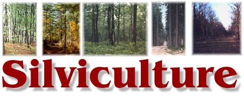 Silviculture Terminologies - Important Silviculture and Biometrics Terminologies - forestrypedia