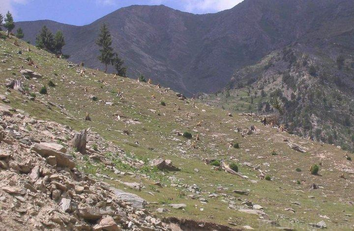 Deforestation in Pakistan - Effects & Solution - forestrypedia.com