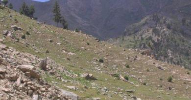 Deforestation in Pakistan - Effects & Solution - forestrypedia.com