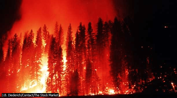 Hydrological Effects of Burning and Forest Fires - Forest Fire (Seminar) - Forestrypedia