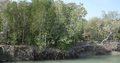 Mangrove Lasbela - Choice of Species - Forestrypedia