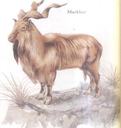 Status of Wildlife in NWFP (KPK) (Term Paper) - Forestrypedia