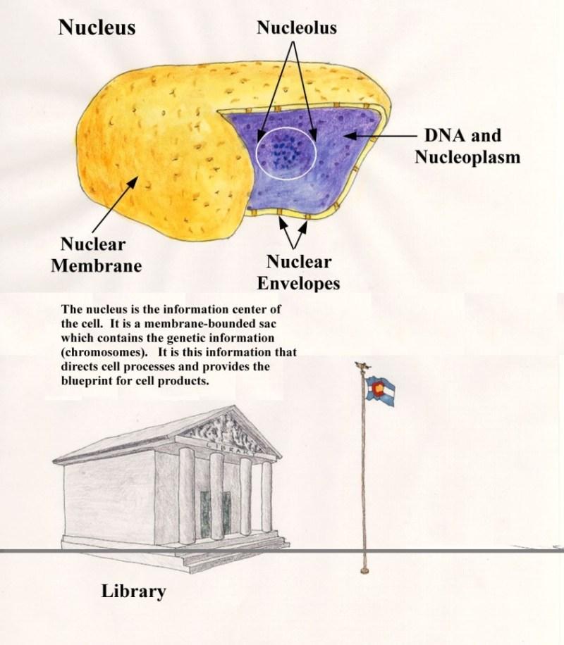 Nucleus - Forestrypedia
