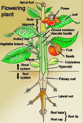 Plant Taxonomy - Scope and Objectives