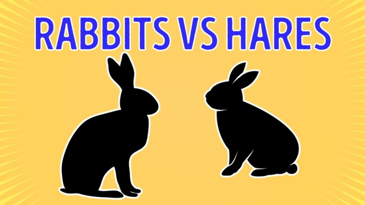 Rabits Vs Hares - Forestrypedia