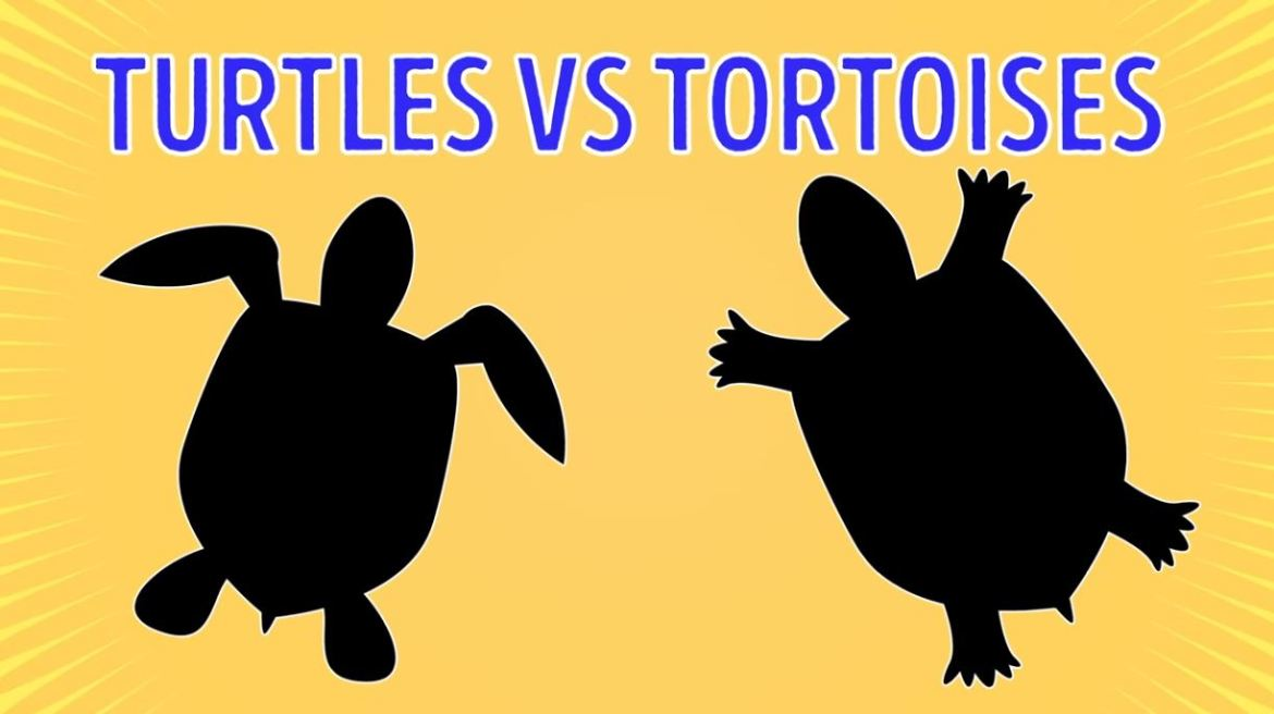 Turtles Vs Tortoises - Forestrypedia