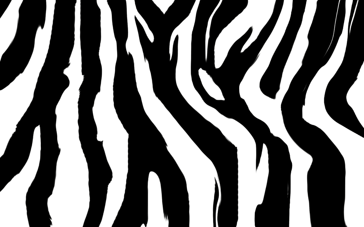 Why Zebras have stripes? - Forestrypedia