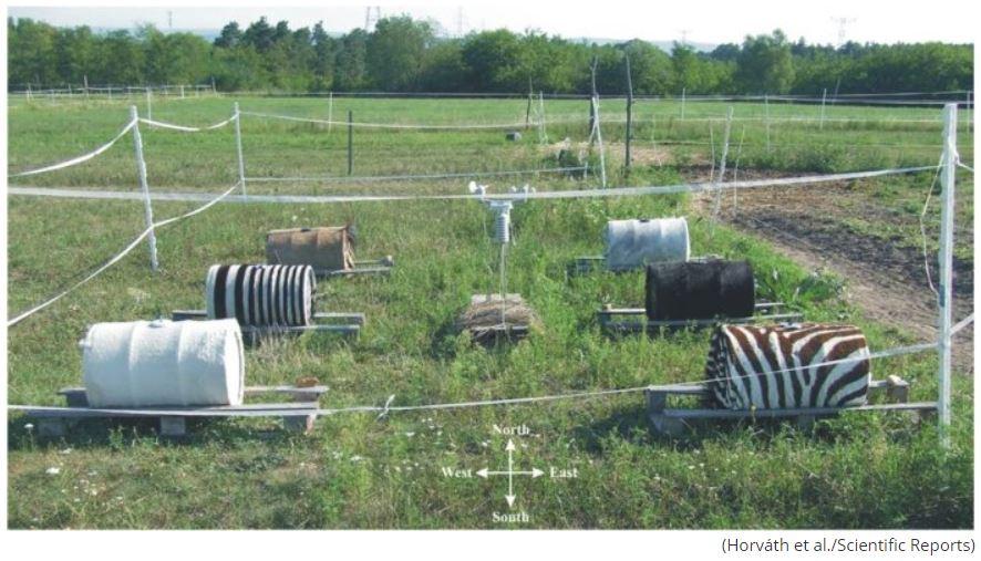 Zebra Strips Test - Forestrypedia