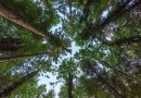 Necessity and Objectives of a Separate Forest Law - Forestrypedia