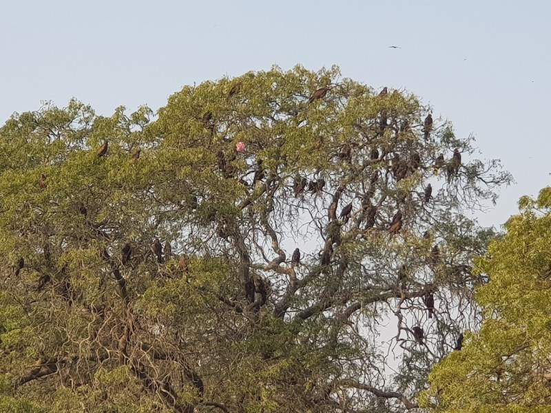 Tree - Birds on a Tree - Importance of Trees