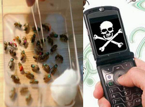 Cell Phone Addiction Is Destroying Wildlife - cellphones and wildlife - forestrypedia