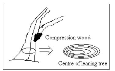 Reaction Wood - Wood Defects