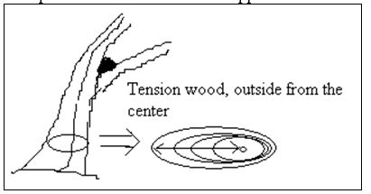 Tension Wood - Wood Defects