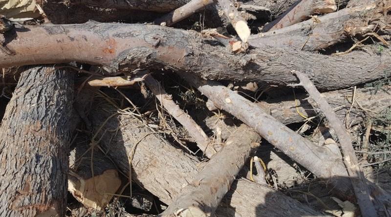 Wood Preservation 1 - Forestrypedia