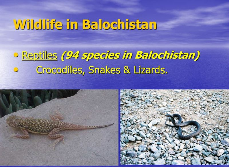 Wildlife in Balochistan 1