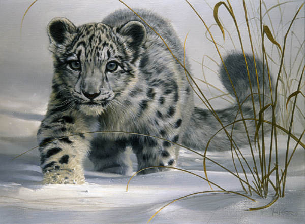 Snow Leopard (Panthera uncia)| Facts, Figures & Informations - Forestrypedia