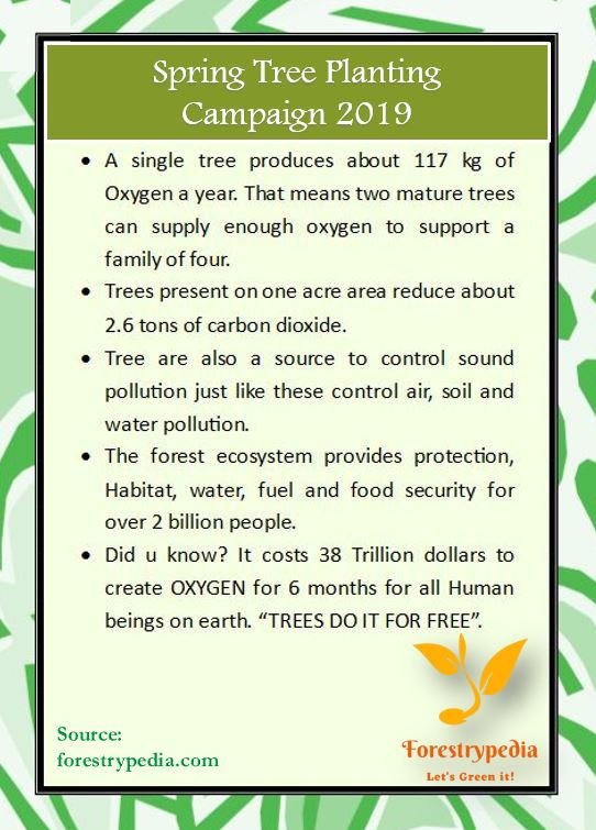 Spring Tree Planting Campaign 2019 | Importance of Trees - Forestrypedia