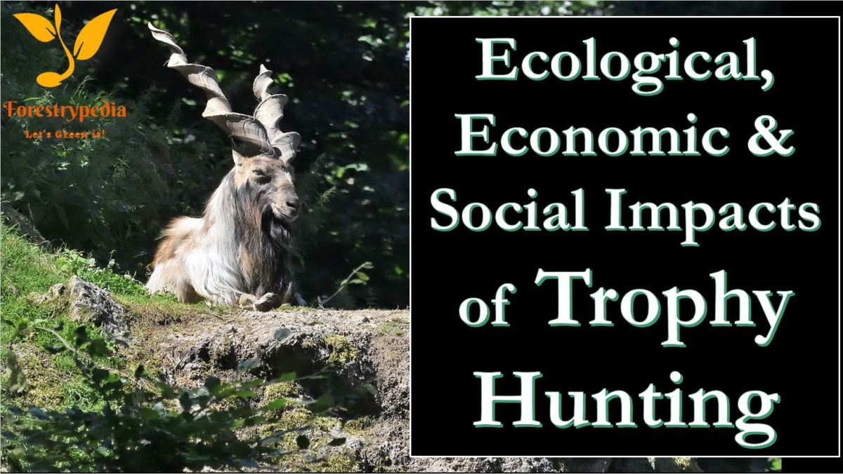 Ecological and Economic Effects of Trophy Hunting