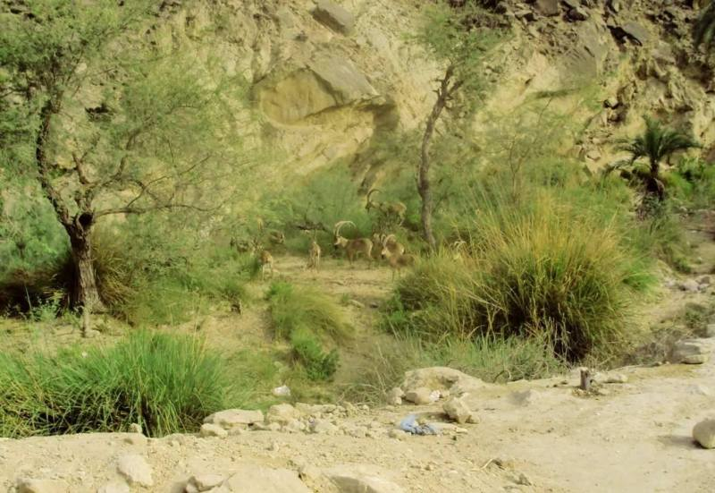 Wildlife of Hingol National Park Balochistan Pakistan - FOrestrypedia