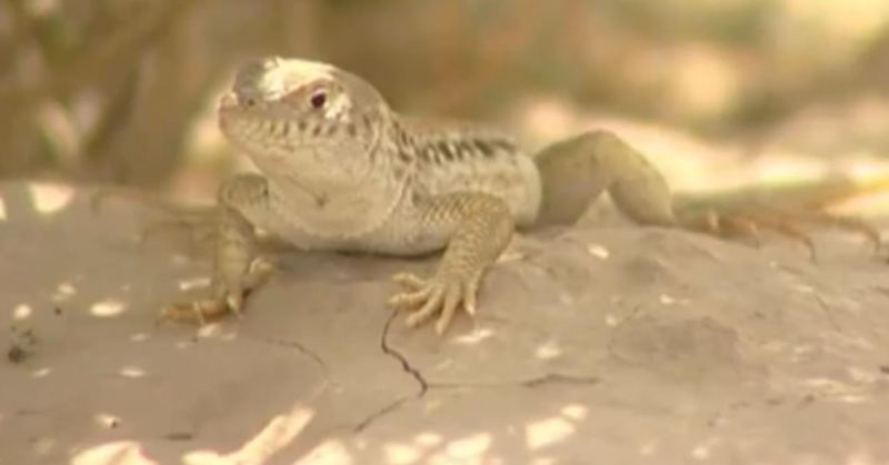 Wildlife of Hingol National Park Balochistan Pakistan - Forestrypedia