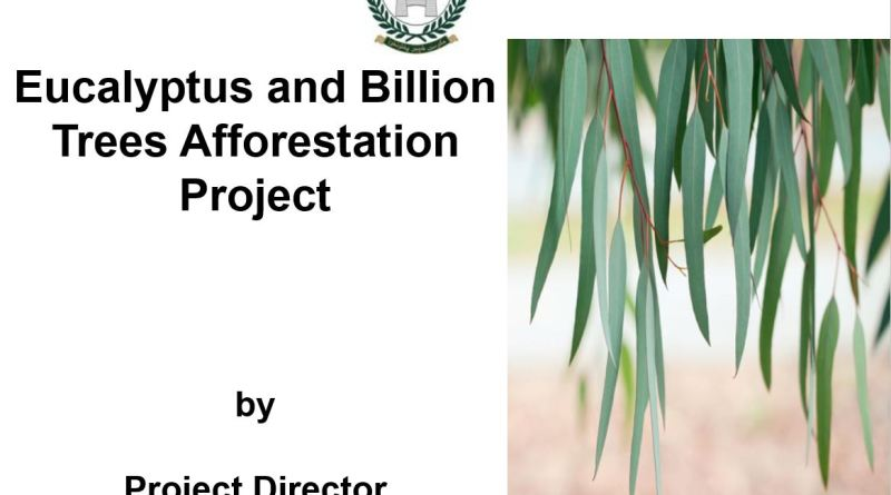 Eucalyptus and Billion Trees Afforestation Project - Forestrypedia