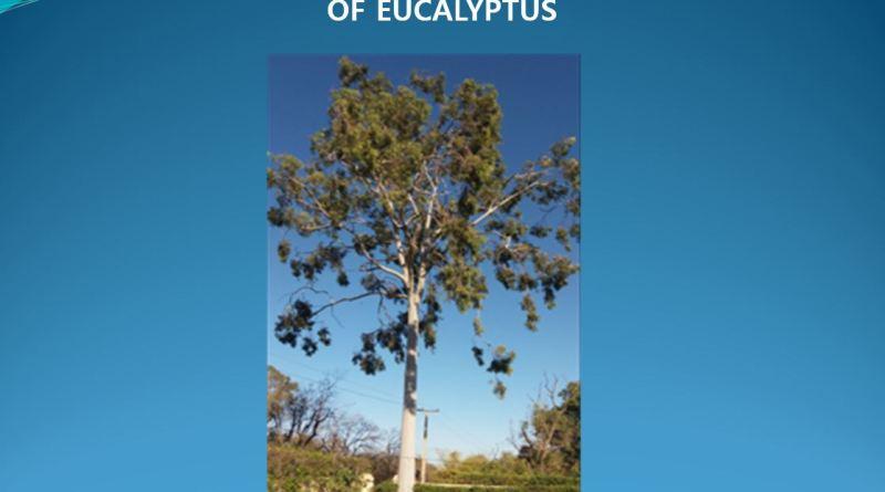 Wood Properties and Utilization of Eucalyptus (Powerpoint Presentation) - Forestrypedia