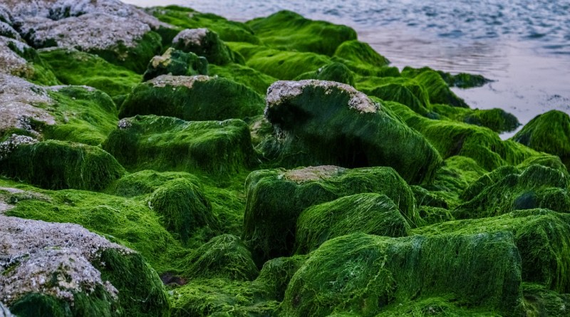 These 18 Facts Will Make you Respect Algae - Forestrypedia