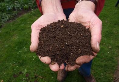 What is Compost? کمپوسٹ کیا ہیں؟ खाद क्या हैं? - forestrypedia.com