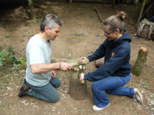 Demonstrate use of bill hook in forest school