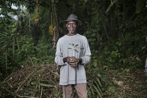 Taming Okok: Domesticating forest foods in Cameroon - CIFOR