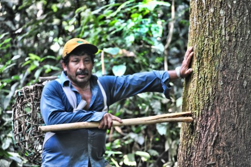 Smallholders and communities often don't reap economic benefits from forests due to convoluted and expensive regulations. Richard Vignola