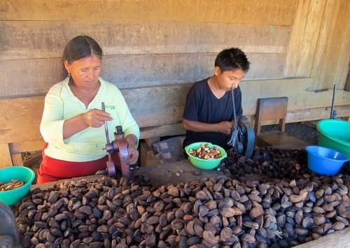 Recolectores de castaña de Brasil en Puerto Maldonado, Perú. . CIFOR/Gabriela Ramírez Galindo