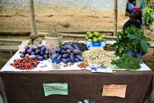 Non-timber forest products, mainly used for subsistence, could provide a business opportunity for communities in the Congo Basin. Ollivier Girard/CIFOR.