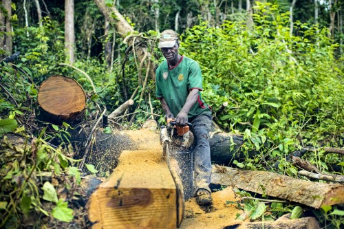 Small-scale loggers in Central Africa could be driven out of business by the EU and US timber import regulations. Ollivier Girard/CIFOR
