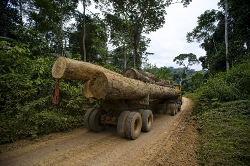 While Cameroon has started to make positive changes to forest management policies, leadership and coordination of state institutions is lacking. Ollivier Girard/CIFOR.
