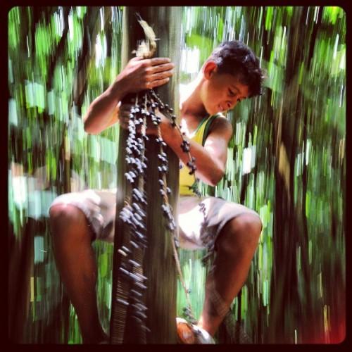 Jean de Souza cosecha açaí del bosque de su tío a lo largo de la carretera BR-364 en Acre. Fotografía de Kate Evans/CIFOR
