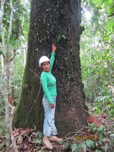 Olivia Revilla é uma estudante de silvicultura na Universidad Nacional Amazónica de Madre de Dios (UNAMAD) no Peru. Ela é uma das 13 alunas locais trabalhando com CIFOR na investigação do impacto da castanha-do-brasil na região.