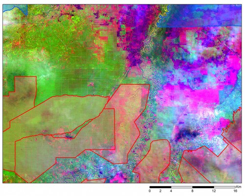 Figure 6. A LANDSAT 8 snapshot acquired on 25 June 2013 revealing existing industrial plantations (grid-like rectangular patterns) outside of the publicly available concession map (red outline: oil palm; blue outline: acacia).