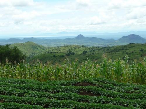 Se necesita más investigación para determinar en qué medida contribuye la agroforestería de pequeña escala a la conservación. Fotografía cortesía del Centro Mundial de Agroforestería.