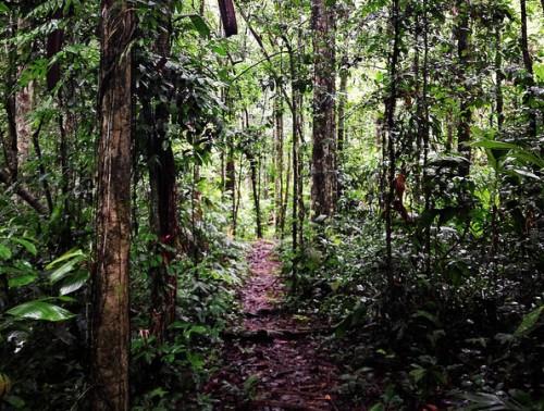Perú está experimentando un crecimiento económico – y es probable que así continúe– con consecuencias para la Amazonía Peruana, dijo Mary Menton del Centro para la Investigación Forestal Internacional (CIFOR).
